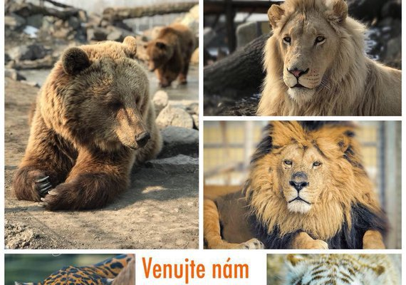 Malkia Park Big Cats Rescue